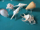 SHELLS SHELLS SHELLS PAPERWEIGHT VANITY ON STAND PICK ONE