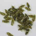 5/10/20/50pcs Soft PVC Fishing Bait Green Fake Cricket Insects Artificial Lure