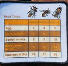 Beekeeper Suit Patch With Key Bee Times, Sew On Fabric P&P Included, Swarm Time