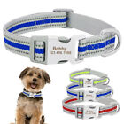 Small Dog Collar Personalized Nylon Puppy Dog Collar with Nameplate Chihuahua