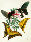 5903.Colorful butterflies & flowers POSTER.Interior design.Nature illustration