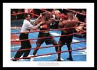 Mike Tyson v Evander Holyfield 1996 Boxing Photo Memorabilia