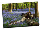 bluebells forest framed canvas print picture wood trees gift idea mothers day