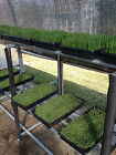 3 PART SPROUTING MIX,ALFALFA,BROCC,RADISH ,ORGANIC,2500 SEED,MICROGREEN