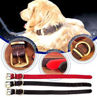 New 2.5cm PU Dog Collar Neck Strap Belt Necklace Buckle Puppy Pet Adjustable