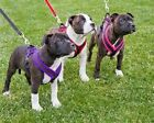 Trixie Fleece Lined Padded Dog / Puppy Harness Xs - Sm Various Colours