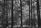 New Mystical Woodland 8 Sheet Forest Wall Mural Giant Wall Mural