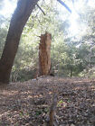GREAT LOT IN CRESTLINE VALLEY OF THE MOON~ BUILDABLE UTILITIES ~ TERMS