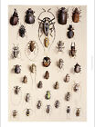 MARIAN ELLIS ROWAN Insects Beetle PRINT choose SIZE, from 55cm to X LARGE, NEW