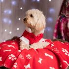 Personalised Embroidered Christmas Fleece Dog Blanket