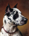 "CARL REICHERT ""A Great Dane"" dog CANVAS browse our SHOP various SIZES, BRAND NEW"