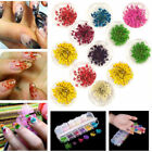 24Pcs/set 3D Nail Art Decoration Dried Pretty Preserved Flower DIY New