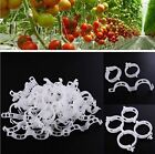 10-100 Pcs Plant Support Garden Clips Trellis for Vine Vegetable to Grow Upright