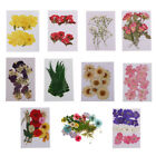 Variety Pressed Real Natural Dried Flowers Organic DIY Floral Decor Arts Crafts