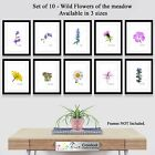 Botanical Prints Set of 10 Wildflower Meadow Garden Photo Poster Print ONLY