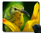 Personalized Your Gaming Mousepad,Parrot Bird Colorful Bright Face Head MousePad