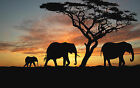 African Sunset Elephants Tree Canvas Pictures Animal Wall Art Prints All Sizes