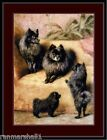 English Print Black Pomeranian Puppy Dog Puppies Dogs Art Vintage Poster Picture