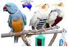 Bird Fashion Nappy/Diaper - Flight Suit For outside cage Toy - for MEDIUM bird
