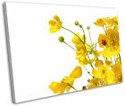 Yellow Buttercups Flowers Floral Framed Canvas Wall Art Picture Print