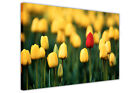 YELLOW AND RED TULIP FIELD FRAMED PICTURES FLORAL CANVAS WALL ART PRINTS POSTERS
