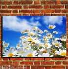 DAISY FLOWERS FLORAL COOL CANVAS WALL ART BOX PRINT PICTURE SMALL/MEDIUM/LARGE