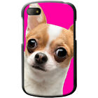 Ultra Cute Chihuahua Close Up Hard Case For Blackberry Q10