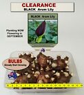 FLOWER BULBS - GLADIOLI - Commercial Mix # MULTI  LISTING