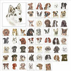 Waggy Dogz Canvas Dogs and Puppies Wall Art 40cm x 40cm by Aritst Christine V...
