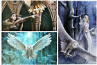 Anne Stokes Owl Collection Wall Plaques/Canvas Prints - Mystical Fantasy Owls