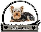 YORKSHIRE DOG YORKIE  color vinyl bumper decals stickers (184)