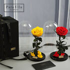 Beauty And The Beast Rose Preserved Flower Eternal Rose Prince Princess Gift New