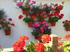 """Plant pot holders,hangers,rings. HANG PLANTS on a TRELLIS or Pallet for 6"""" pots"""