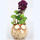 Artificial Flower Succulents Ornament Lotus Centerpiece  Lotus with 6 Heads
