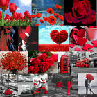 DIY Paint By Number Kit Acrylic Painting 40 50CM Red Beauty  Flowers Home Decor