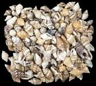 Внешний вид - Lots Colorful Mixed Bulk Sea Shells Beach Sea Star DIY Craft Aquarium Decoration
