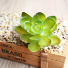 Artificial Succulents Plastic Plant Fake Cactus Floral Garden Home Office Decor