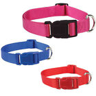 blue colored dog - Nylon Dog Collar, Zack & Zoey, USA Seller, 3 Colors 4 Sizes! Durable! Puppy