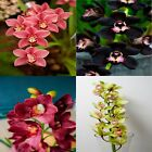100x Cymbidium Orchid Seeds Bonsai Plant House Herb Tree Garden Flower Pot Decor