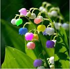 50 Pcs Lily Of The Valley Flower Seeds Indoor Rare Bell Orchid Seeds Rich Aroma
