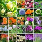 Wholesale Various Flower Seed Garden Potted Rare Flower Plant Ornamental SE