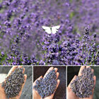 Внешний вид - 100g Natural Dried Lavender Buds Dry Flowers For Soap Sachets Baking Fragrance