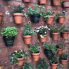 """6  Plant Pot Hangers,Holders,Rings,Hang 6""""(15Cm) Flower Pots On A Wall Or Fence"""