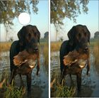 Vinyl Cornhole Skin Wraps Lab Duck Hunting Dog Scene
