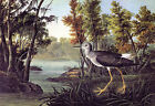 "Lesser Yellowlegs -by John James Audubon -20""x26"" Art on Canvas"