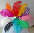 10 / 50pcs Dyed Assorted Ostrich Feathers Wedding Decoration Wholesale