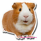 2 x Glossy Vinyl Stickers - Cute Ginger Guinea Pig Wall Laptop Decal Kids #0129