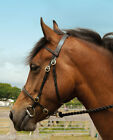 Lovely Top Quality Windsor Equestrian In Hand Bridle Show All Sizes BLK & HAV