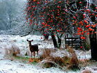 Winter Meal Deer Snow Landscape Canvas Pictures Wall Artwork Prints All Sizes