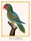 5408.Parrot with red beak perched on a branch.POSTER.Decoration.Graphic Art